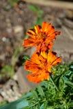 Loucura da cor e flores agradáveis Ajardine no jardim nos plenos verões, em um dayn ensolarado Imagem de Stock