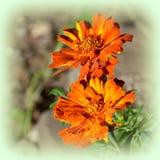 Loucura da cor e flores agradáveis Ajardine no jardim nos plenos verões, em um dayn ensolarado Fotos de Stock