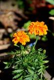 Loucura da cor e flores agradáveis Ajardine no jardim nos plenos verões, em um dayn ensolarado Foto de Stock Royalty Free