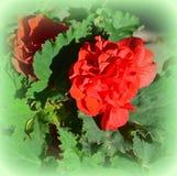 Loucura da cor e flores agradáveis Ajardine no jardim nos plenos verões, em um dayn ensolarado Imagens de Stock Royalty Free