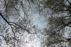 Louds del ¡de Ð a través de ramas de árbol fotos de archivo