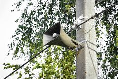 Loudspeaker on the pole. Loudspeaker hangs on a pole on the background of leaves of trees Stock Images