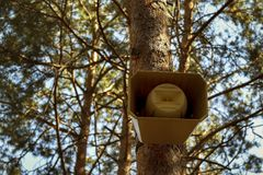 The loudspeaker horn system alert attached to the pine tree in the forest. Illustration to draw attention Stock Photos