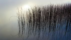 Lough Derg, Shannon River, Ireland. Lough Derg reeds in the early morning winter mist Royalty Free Stock Images