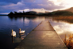 Lough Gill. Early morning on Lough Gill, Co.Sligo, Ireland, with swans swimming in foreground Stock Image