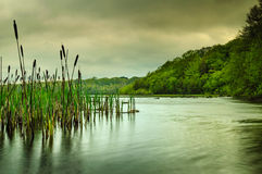 Lough Graney. Lough Lake County Clare Ireland Water Reeds Green Trees Cloudy sky Stock Image