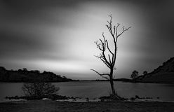 Lough Gur tree 1 Royalty Free Stock Photo