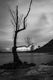 Lough Gur tree 2 Royalty Free Stock Photo