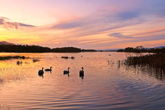 Lough Leane Royalty Free Stock Images