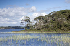 Lough Leane from Dinis Cottage Cafe Path, Killarney National Par Royalty Free Stock Image