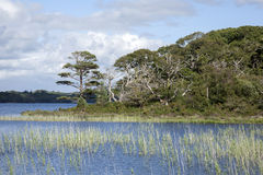 Lough Leane from Dinis Cottage Cafe Path, Killarney National Par Royalty Free Stock Images