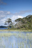 Lough Leane from Dinis Cottage Cafe Path, Killarney National Par Stock Photos