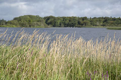 Lough Leane Lake, Killarney National Park Stock Photos