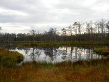 Lough. Swamp cenu tīrelis Royalty Free Stock Photos