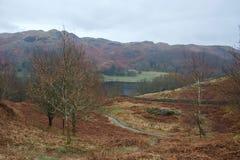 Loughrigg, secteur de lac : vallée et Tarn avec les arbres nus et la fougère brune photographie stock libre de droits
