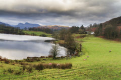 Loughrigg tarn. In the lake district UK Royalty Free Stock Photos