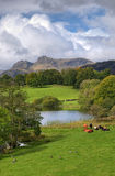 Loughrigg Tarn, portrait Stock Photos