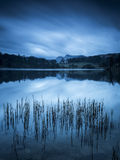 Loughrigg Tarn Reeds. Reeds and reflections of the Langdale Pikes in Loughrigg Tarn Stock Photo