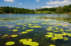 Loughrigg Tarn. Water lillies on Loughrigg Tarn with the Langdale Fells in the distance a popular tourist destination in The Lake District, Britain Royalty Free Stock Images