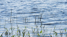 Louisa湖 免版税库存照片