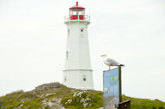 Louisbourg Lighthouse Seagull - Nova Scotia - Canada royalty free stock photo