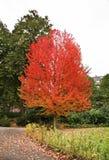 Louise Marie Park in Namur. Wallonia. Belgium Royalty Free Stock Images