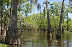 Louisiana Bayou Royalty Free Stock Photos