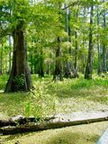 Louisiana bayou Stock Photos