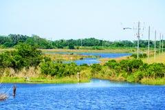 Louisiana Bayou. A scene from a south Louisiana bayou stock images