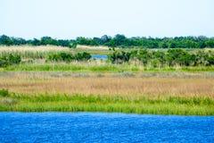 Louisiana-Bayou-Sumpfgebiete lizenzfreie stockbilder