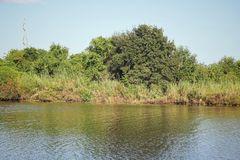 Louisiana-Bayou-Sumpfgebiete stockbilder