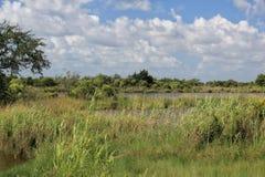 Louisiana-Bayou-Sumpfgebiete stockfotografie