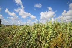 Louisiana-Bayou-Sumpfgebiete stockfotos