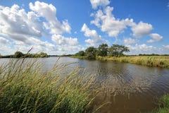 Louisiana-Bayou-Sumpfgebiete stockfoto