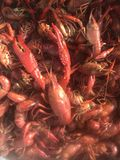 Louisiana crawfish in a boiling pot. Royalty Free Stock Photo