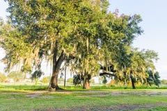 Louisiana-Eichen lizenzfreies stockbild