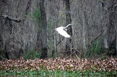 Louisiana-Kran Lizenzfreies Stockfoto