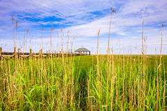 Louisiana marsh Royalty Free Stock Photo
