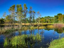Louisiana Marsh pond royalty free stock image