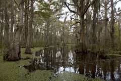 louisiana nära den New Orleans swampen Arkivbilder