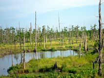 Louisiana near New Orleans Swamp Royalty Free Stock Image