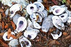 Louisiana ostronskal Arkivfoton