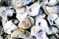 Louisiana ostronskal royaltyfri fotografi