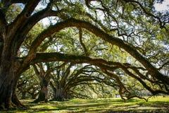 Louisiana-Plantage mit einer schönen Linie von Eichen lizenzfreie stockfotos