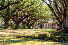 Louisiana plantation with a beautiful line of oaks Stock Image