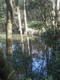 Louisiana-Sümpfe im November lizenzfreie stockfotografie