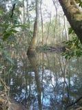 Louisiana-Sümpfe im November stockbilder