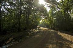 Louisiana-Schotterweg Lizenzfreies Stockbild