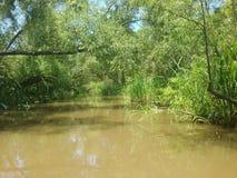 Louisiana-Sumpf stockfotografie