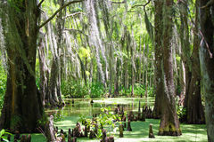 Louisiana-Sumpf stockfotos